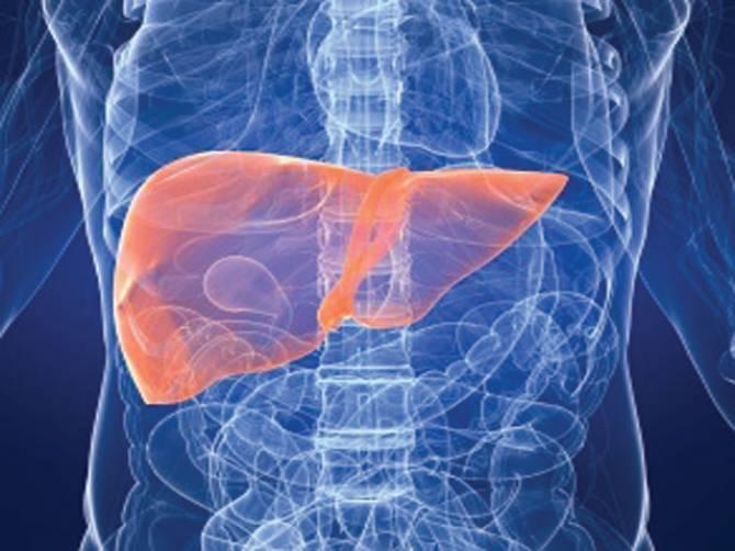 Artificial liver