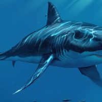 Does Megalodon Shark Still Exist in the Deep Ocean?