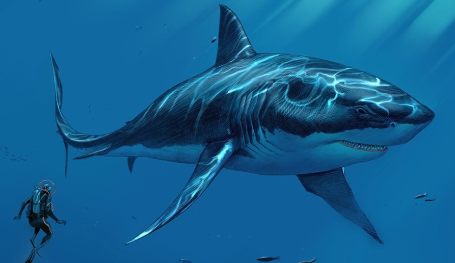 Does Megalodon Shark Still Exist in the Deep Ocean?