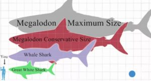 Megalodon shark was extremely huge. Its teeth have been over 17 centimeters (7 inches) in total height