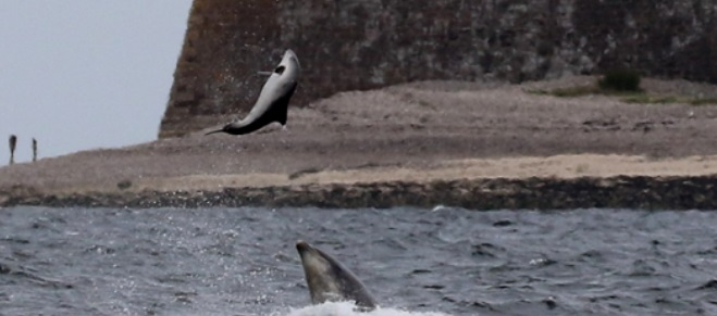 A Rare Attack by Dolphin Caught On Camera Shows How Aggressive Dolphin Can Be