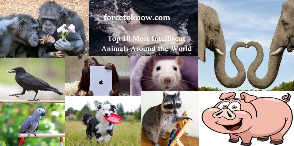 Top 10 Most Intelligent Animals Around the World