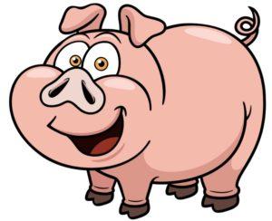 pigs have excellent memories