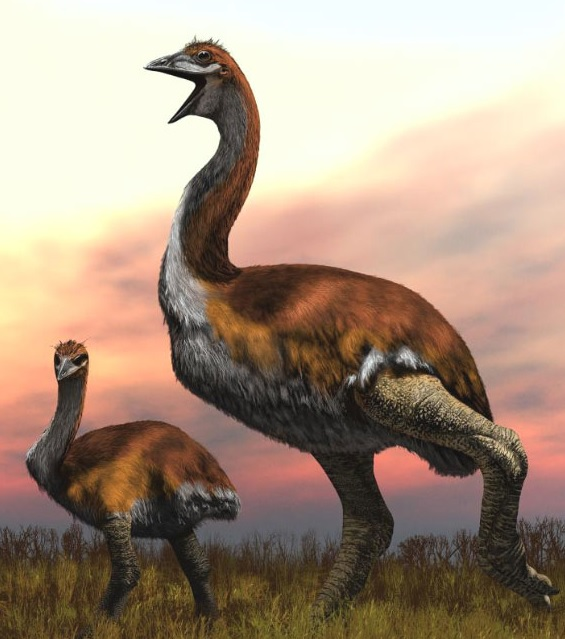 Scientists Name the Largest Bird Ever as Vorombe Titan