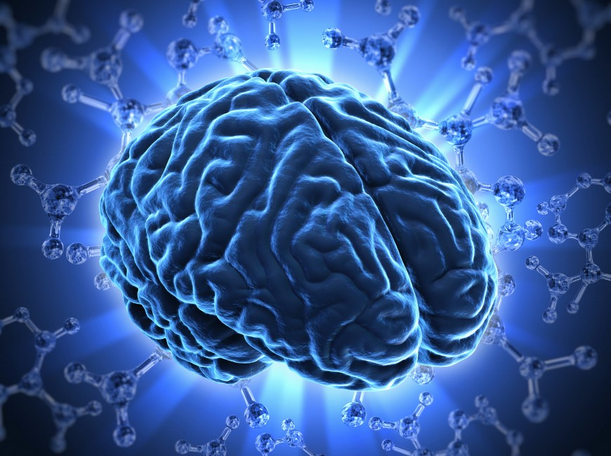 Top 10 Facts About Human Brain Which is Really Interesting
