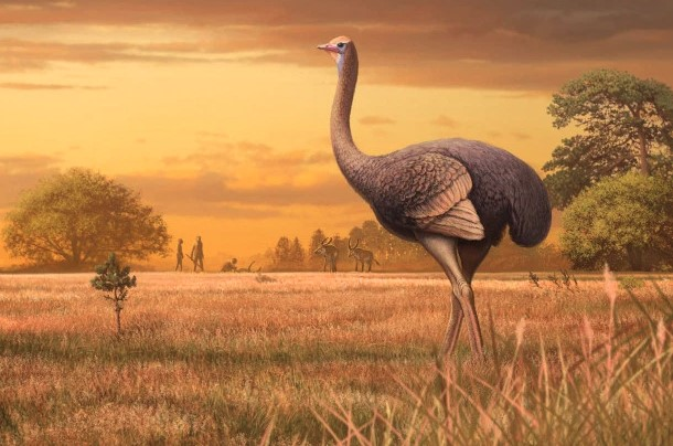 Researchers Have Discovered Very Big Bird