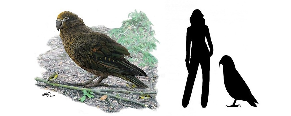 Scientists Have Discovered the Largest Parrot in New Zealand